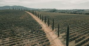 Discover Italy Wine Regions