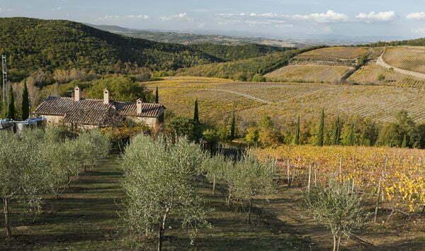 Casanuova delle Cerbaie - Winery view