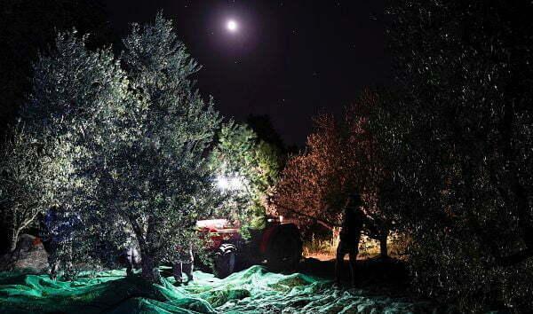 Frantoio Presciuttini - Olive Oil Online Shop