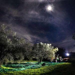 Frantoio Presciuttini - Olive Oil Mill - Lazio Italy