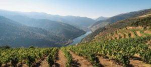 Douro Wine Region - The Good Gourmet