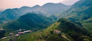 Veneto Wine Region - The Good Gourmet